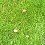 Pilze wachsen wie Pilze nach dem Regen