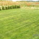 Ungleichmäßig gedüngter Rasen mit Streifen