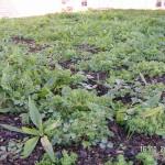 Die Vegetation auf dem Dach 2 Monate nach Pflanzung