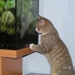 Und ins Aquarium kann er lange reingucken