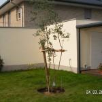 Fertig ist ein Eukalyptus Baum