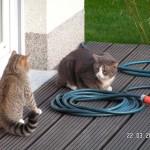 Der erfahrene Katzenfreund
