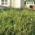 Hohe Pflanzen abgemäht *grr*