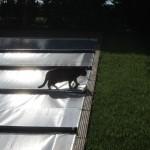 Der ultimative Katzentest auf der Poolabdeckung